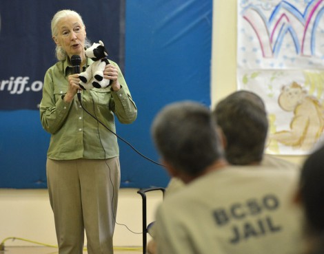 Jane Goodall while holding Cow talks to Boulder County Jail transition inmates who are also members of the Jane Goodall Institute Roots and Shoots program about animals used for food and the environment at the jail on Friday. David R. Jennings Staff Photographer October 1, 2015 For more photos please go to dailycamera.com.