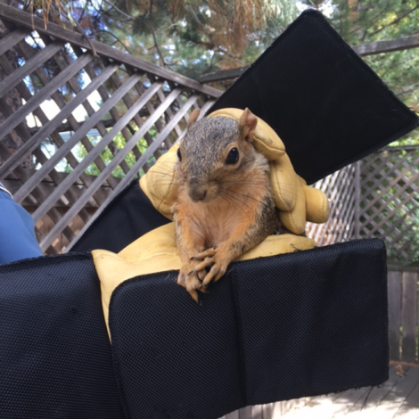 Squirrel held with gloved hands.